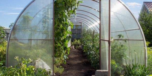 Quel budget pour construire une serre de jardin - Comment choisir une serre de jardin ...